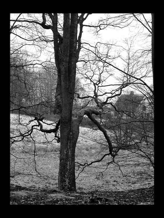 hus træ skov gåture nature helen kholin