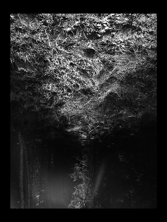 skov gåture nature 3 wabi sabi helen kholin