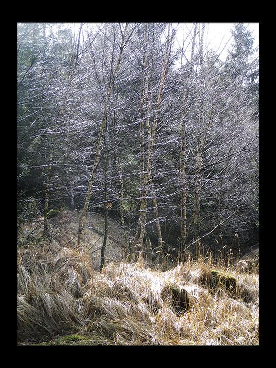 skov gåture nature helen kholin
