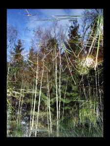 skov gåture nature helen kholin træ spejler