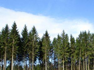 skov nature forest helenkholin helen kholin