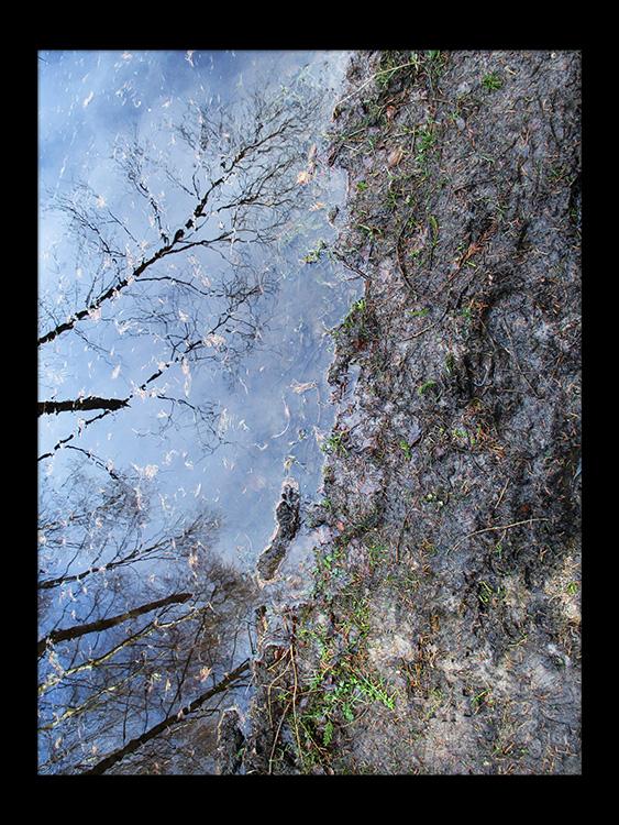 spejler træ vand skov gåture nature helen kholin