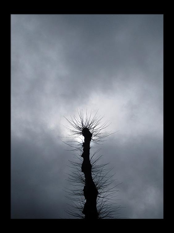 ensomhed skov gåture nature helen kholin