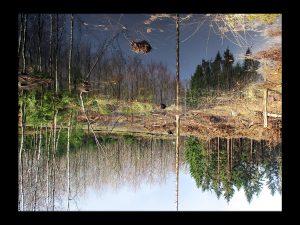 skov gåture nature vand helen kholin
