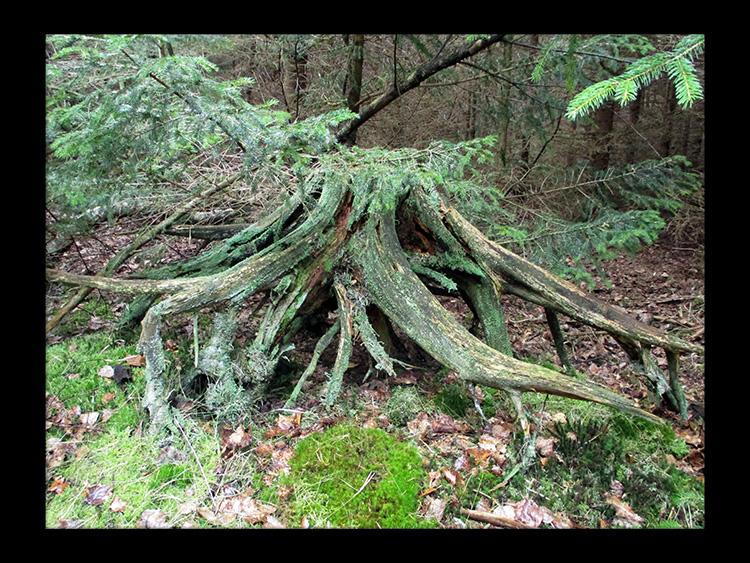 wabi sabi forest skov gåture nature helen kholin