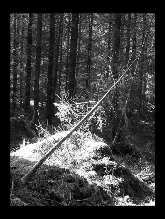 solen skinner forest skov gåture nature helen kholin