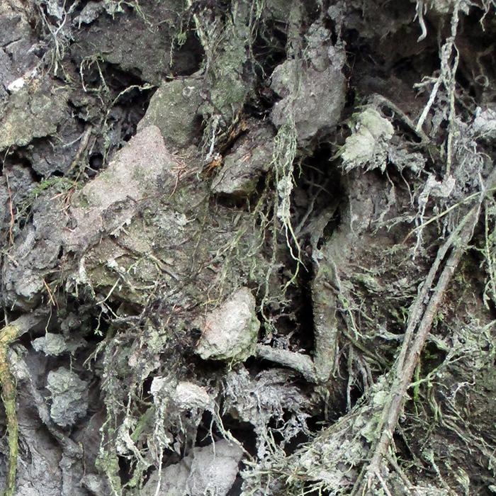 wabi sabi who lives in the tree forest skov gåture nature helen kholin