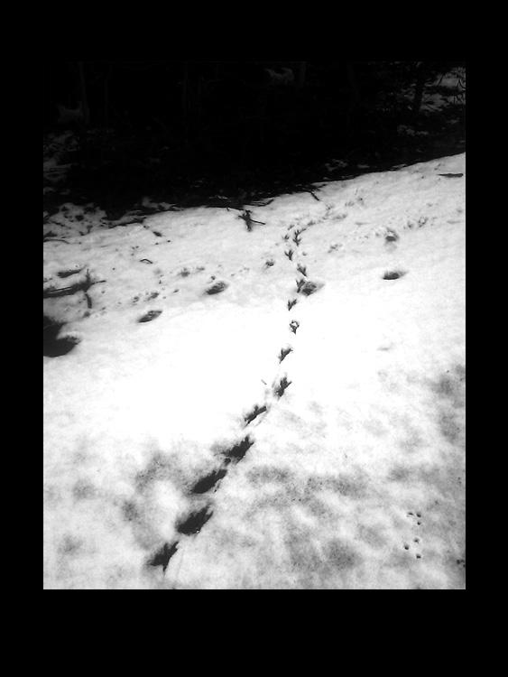 7 life of a snowman fotohistorie by helen kholin