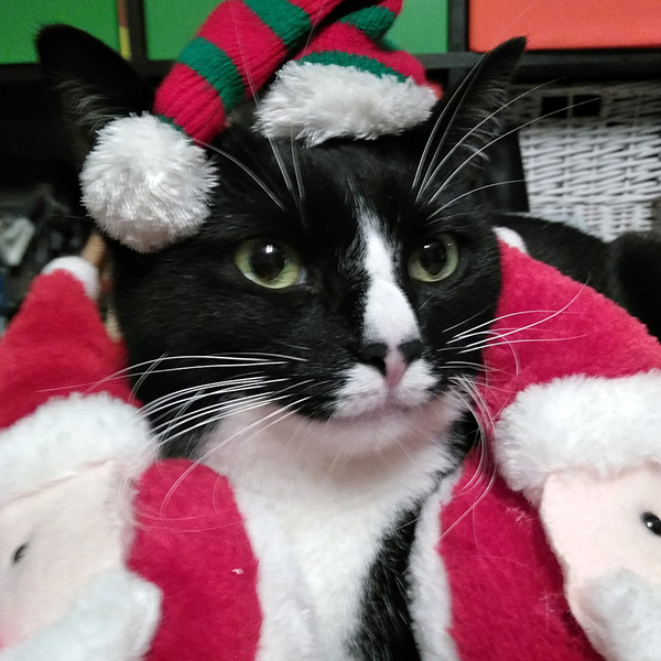 Merry Christmas and Happy New Year 2019 Julecat Christmascat